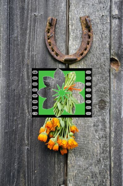 rusty horseshoe and calendula herb bunch on old wooden wall